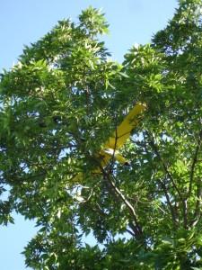 AeroBird Tree Landing